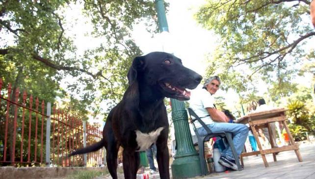 RÍO CUARTO. En la localidad del sur encontraron qué hacer con los animales (Archivo).