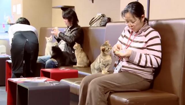 Qu son las cafeter as de gatos en jap n y por qu ampl an for Ministerio del interior horario de atencion