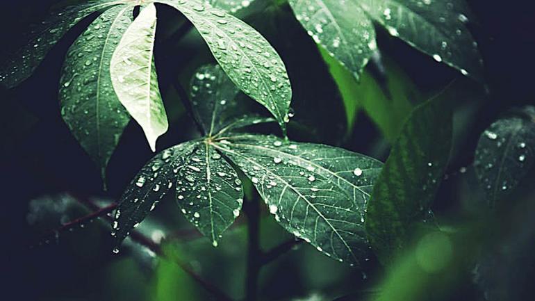 Si elegimos especies nativas para armar nuestro jardín,ahorramos grandes cantidades de agua. (Aguas Cordobesas)