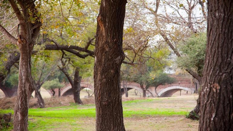Parque de La Cañada cuenta con árboles como algarrobos, sauces, mistoles y otras especias. (Grupo Edisur)