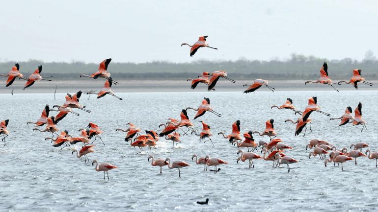 Mar Chiquita nos ofrece la posibilidad de encontrarnos con pintorescas aves en un entorno natural maravilloso (Interturis).