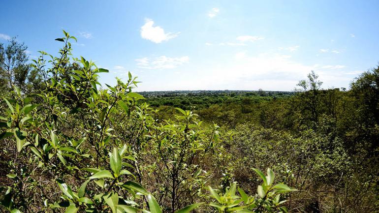 Las reservas naturales urbanas conservan remanentes de ambientes silvestres. (Municipalidad de Córdoba)