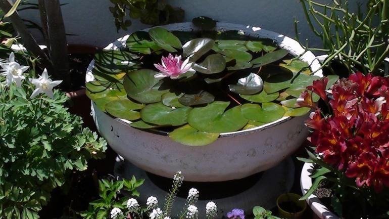 estanques, un rincón acuático que se disfruta todo el año