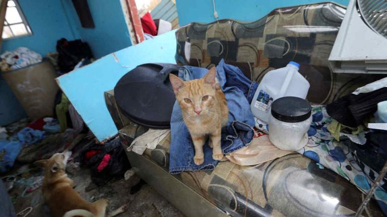 GATO. Que sobrevivió al huracán María en Montebello, Puerto Rico (AP/Gerald Herbert).