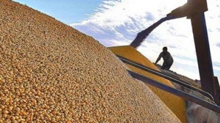 PODER DE COMPRA. La soja ha liderado la suba de precio de los granos: más que duplicó su valor en los últimos 12 meses. (LA VOZ)
