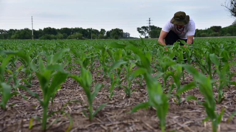 Cultivo. Un lote con maíz en la zona rural de Villa María, a la vera de la ruta nacional 9 y a metros del cruce con la ruta provincial 2. Crece la apuesta por el cereal. (La Voz)