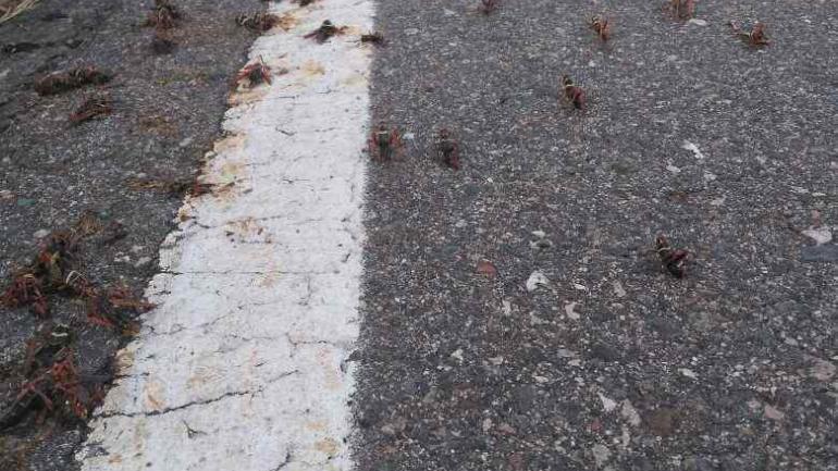 mortandad de abejas