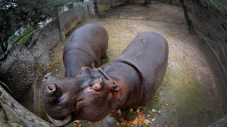 Sin descendencia. No se reproducirán las especies exóticas, que quedarán hasta que mueran. (José Hernández)