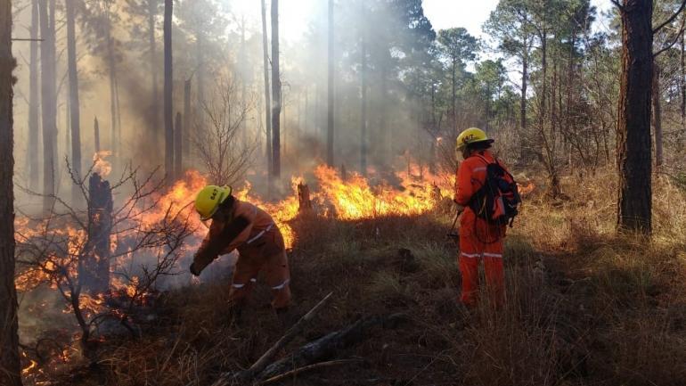 En San Agustín. Una zona de pinares tomó fuego ayer, en la parte más baja de Calamuchita. (Federación de Bomberos)