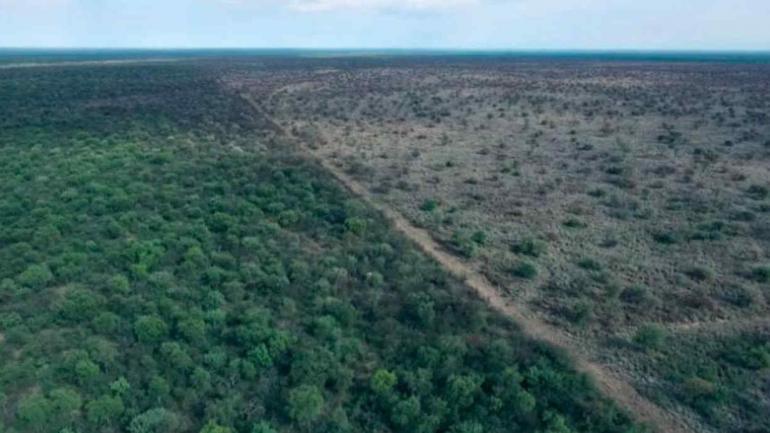 QUÍMICOS. El supuesto desmonte químico cerca de Chuña fue cronicado por ElDoce.tv (ElDoce.tv)
