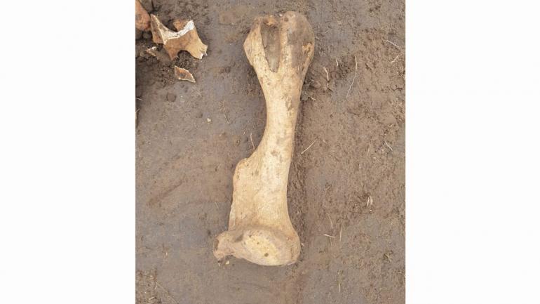 HOLMBERG. Los restos óseos hallados (Gentileza LV16).