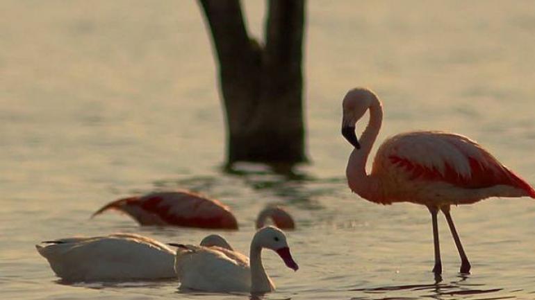 Paraíso natural. La laguna Mar Chiquita es un humedal con una enorme riqueza en fauna y flora, única en el mundo. (Gentileza Cristian Juárez)