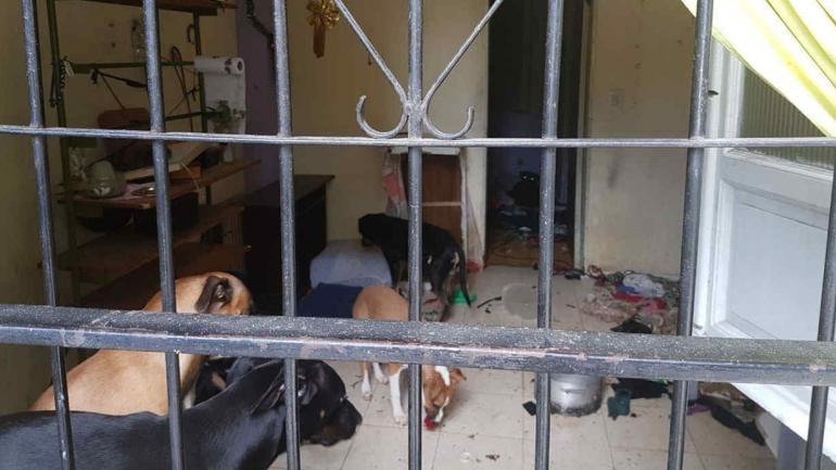 CONSTITUCIÓN. Así fueron encontrados los perros dentro del departamento.