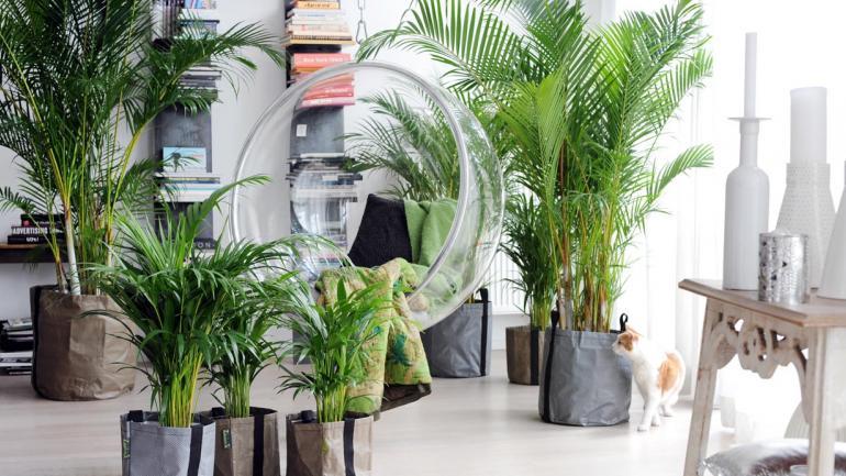 Cu les son las plantas de interiores m s apropiadas para for Cuales son las plantas para interiores