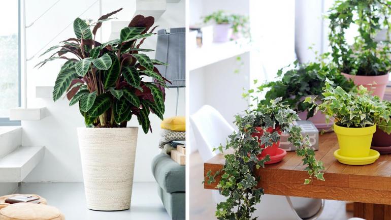 Cu les son las plantas de interiores m s apropiadas para - Plantas del interior ...