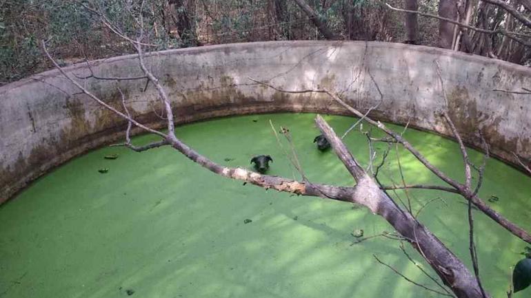 COLONIA CAROYA. Los perros rescatados (Foto Radio Jesús María).