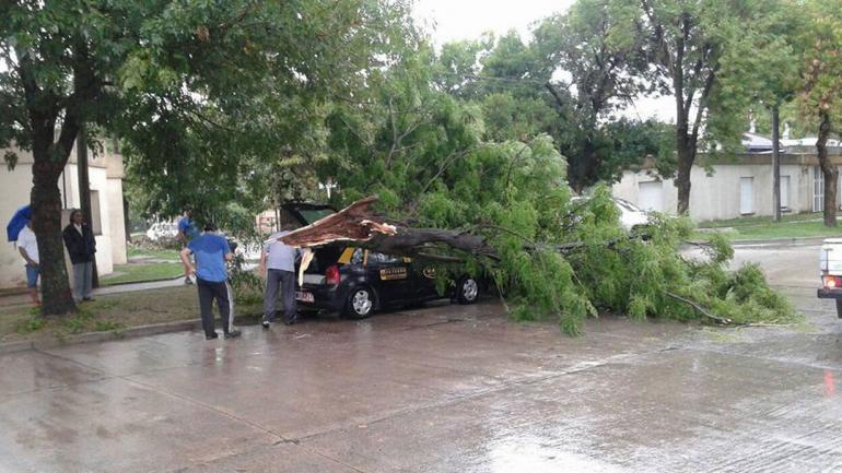 RÍO CUARTO. Un árbol aplastó un taxi (Gentileza Meli Villalobo).
