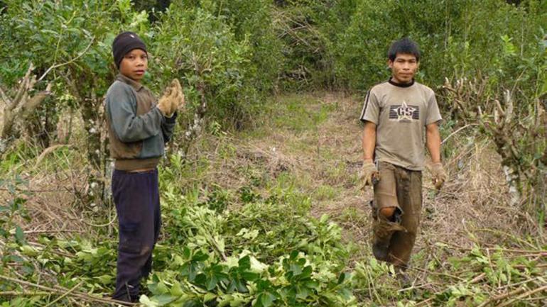 """El 90% de la yerba Mate que se consume en Argentina se cultiva con trabajo infantil. Foto: Pablo Valle / """"Un sueño para Misiones""""."""