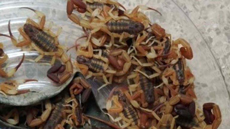 Imagen del 20 de marzo pasado, tomada por un científico del Conicet.