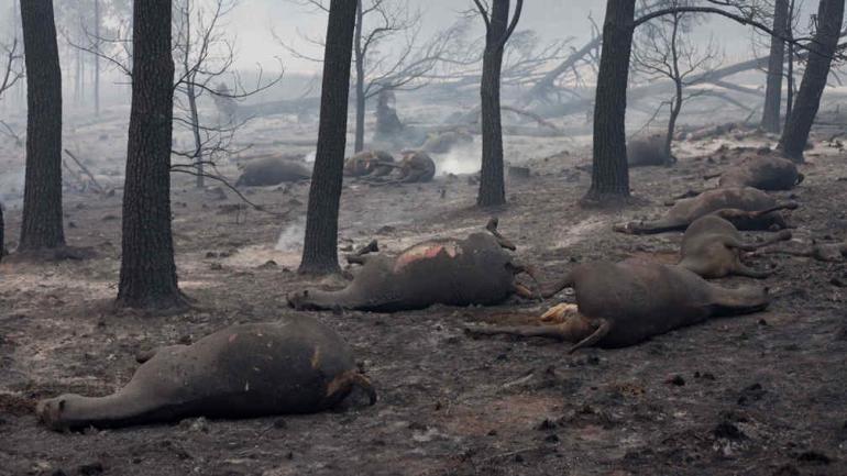 ANIMALES CAÍDOS. Caballos afectados en Calamuchita (La Voz).