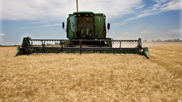 TRIGO. El cereal de la nueva campaña ya está sembrado. Luego de más de dos años volverá a pagar retenciones. (LA VOZ / ARCHIVO)