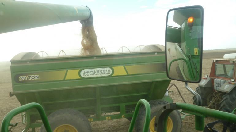 VOLUMEN. La soja, con una retención ahora del 29 por ciento, será el productor que más dinero aportará. (LA VOZ / ARCHIVO)