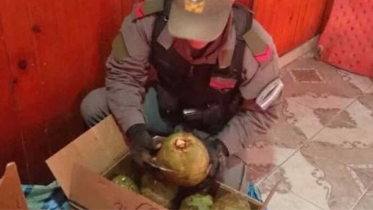 DROGA. La cocaína estaba oculta en cocos (Clarin).