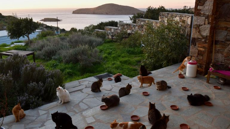 GRECIA. Esta es la vista que va a tener la persona que quede contratada para cuidar los animales. (Facebook: God's Little People Cat Rescue)