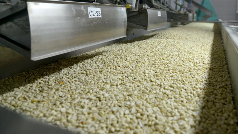 """Del primer mundo. Todo el proceso de limpieza, selección y """"pelado"""" del maní se hace de manera automatizada, con tecnología de primer nivel mundial. (Ministerio de Agroindustria)"""