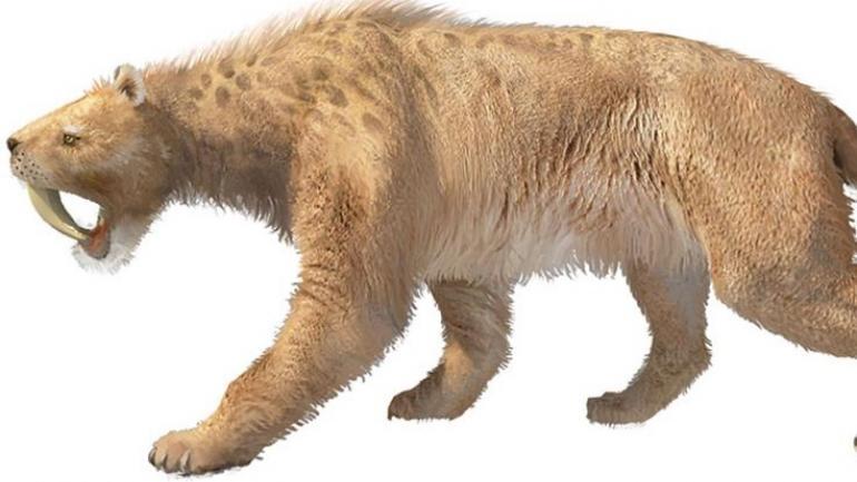 SMILODON. Una imagen ilustrativa del tigre dientes de sable. (Conicet)