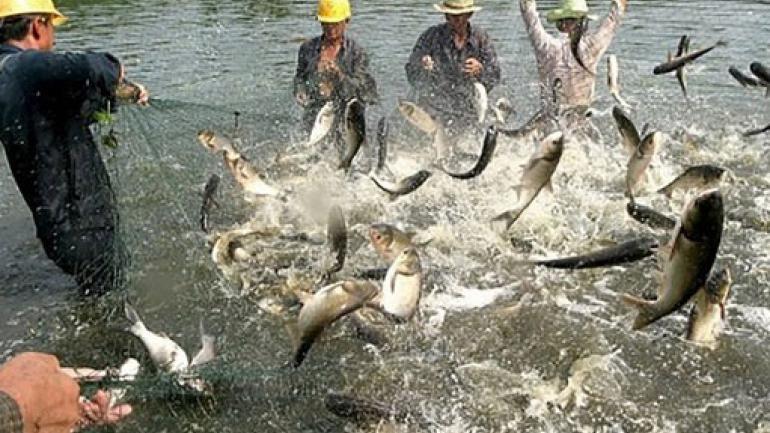 Los peces saltan del agua cuando los pescadores arrastran con fuerza la red en la orilla del lago Qiandao en el condado de Chun'an, al este de la provincia de Chinas Zhejiang (AP)
