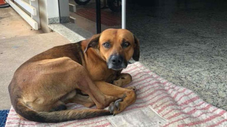 El perrito espera en la puerta del hospital el regreso de su amo (Facebook Cristine Sardella)