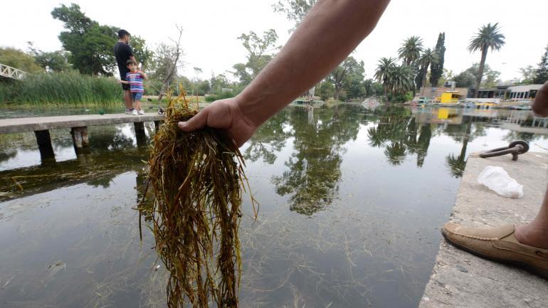 Listos. Los primeros ejemplares de carpa sogyo serán introducidos en el lago del parque Sarmiento. (José Hernández)
