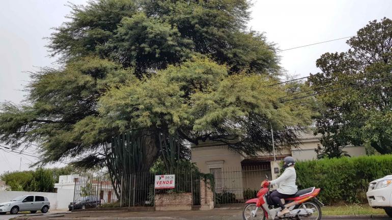 Río Tercero. Una casona y un árbol histórico, en venta y en riesgo.