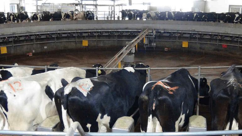 LECHERÍA. En dos tambos estabulados, Adecoagro produce 95 millones de litros de leche al año (Adecoagro)
