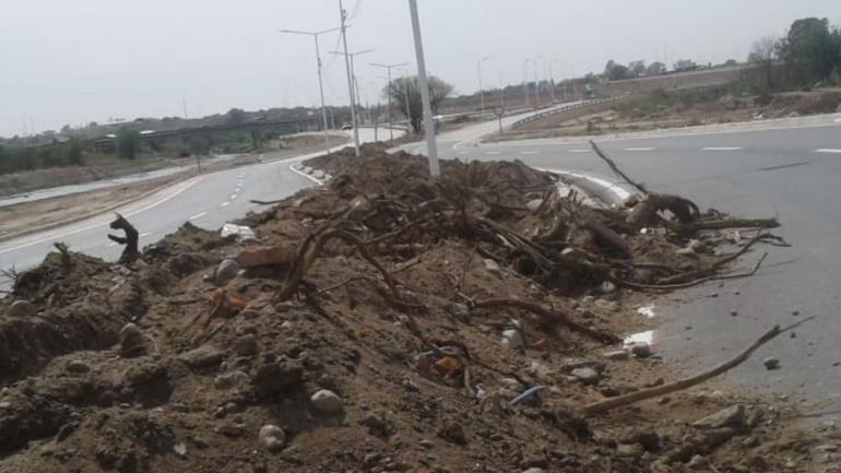 La Municipalidad denuncia la extracción de más de 50 tipas (Municipalidad de Córdoba).