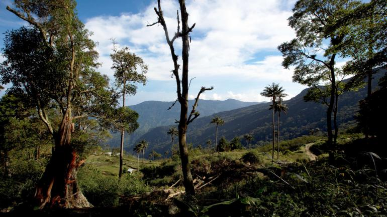 Los agricultores cortan árboles para cultivar frutas y hortalizas en la zona costera de Carayaca, en las afueras de Caracas, Venezuela, donde el ave roja de siskin, que se asemeja a un pinzón, está desapareciendo de la naturaleza. Existe una tendencia entre los agricultores que aumentan la producción de granos de café reduciendo la densidad de los cafetos para obtener más luz solar, o arrancándolos por completo para plantar hortalizas que producen un beneficio más rápido. (Foto AP / Fernando Llano)