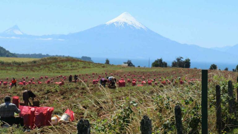 Volcán Osorno (Juan Simo/La Voz).