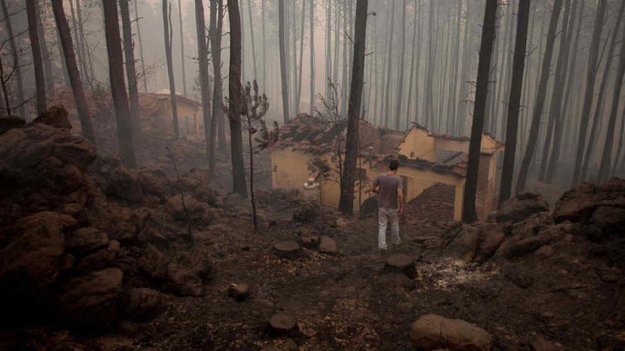 Destrucción. Cabañas quemadas en un pinar cercano a Yacanto de Calamuchita, donde el fuego fue devastador (La Voz).
